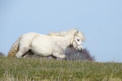 albina2